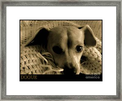 Dogue Framed Print by Angela J Wright