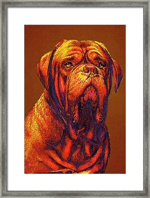 Dogue De Bordeaux Framed Print by Jane Schnetlage