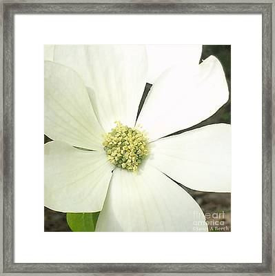Dogwood 1 Framed Print by Janet Berch