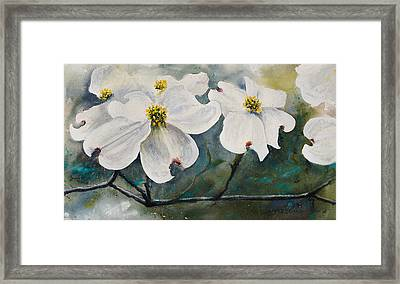 Dogwood 7 Framed Print