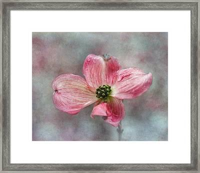 Dogwood Framed Print by Angie Vogel