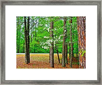 Dogwood At  Mile 198 On Natchez Trace Parkway-mississippi   Framed Print