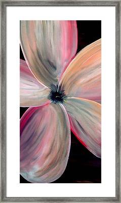 Dogwood Bloom Framed Print by Mark Moore