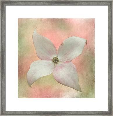 Dogwood Blossom Framed Print by Angie Vogel