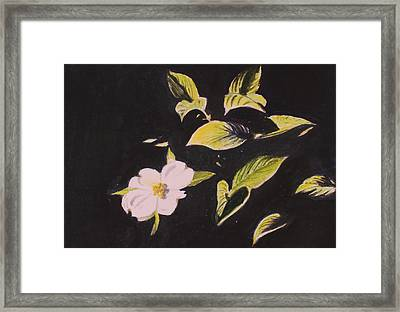 Dogwood Blossom Framed Print by Donna Oshea