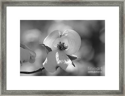 Framed Print featuring the photograph Dogwood Blossom by Tannis  Baldwin