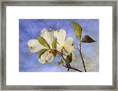 Dogwood Blossoms And Blue Sky - D007963-b Framed Print