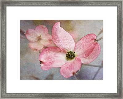Dogwood Blossoms Framed Print by Angie Vogel