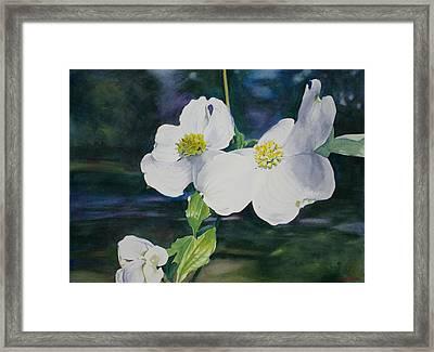 Dogwood Blossoms Framed Print