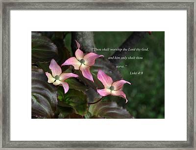 Dogwood Blossoms Framed Print by Paul Miller