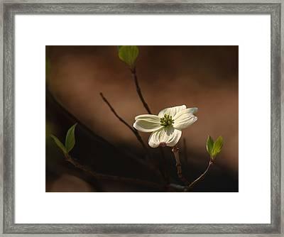 Dogwood Bokeh Painting Framed Print by Lara Ellis