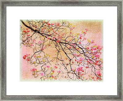 Dogwood  Canvas Framed Print by Jessica Jenney