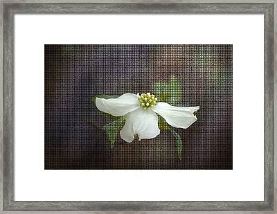 Dogwood Framed Print by Cindy Rubin