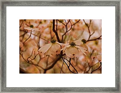 Framed Print featuring the photograph Dogwood Day Afternoon by John Harding