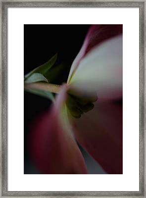 Dogwood Flower Framed Print
