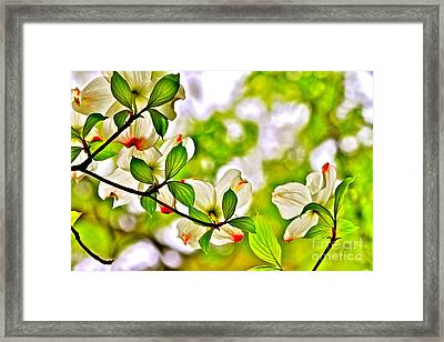 Dogwood Impressions I Framed Print by Jay Nodianos