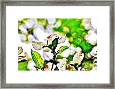 Dogwood Impressions Iv Framed Print by Jay Nodianos