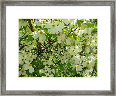 Framed Print featuring the photograph Dogwood Kissed By The Sun by Becky Lupe