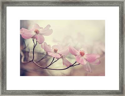 Dogwood Framed Print by Magda  Bognar