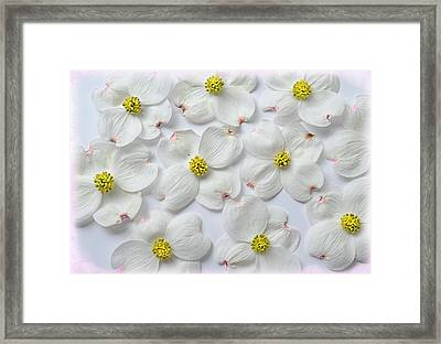 Dogwood Season Number Three Framed Print by Lena Wilhite