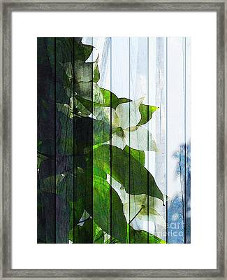 Dogwood Shades Framed Print