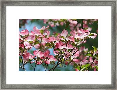 Dogwood Tree Framed Print by Laurel Gillespie