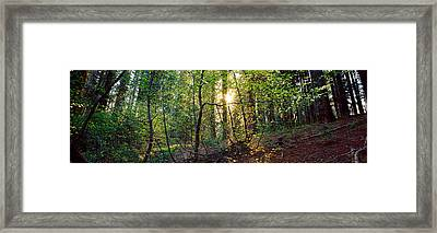 Dogwood Trees In A Forest, Sequoia Framed Print by Panoramic Images