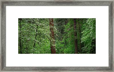 Dogwood Trees In Springtime At Yosemite Framed Print by Panoramic Images