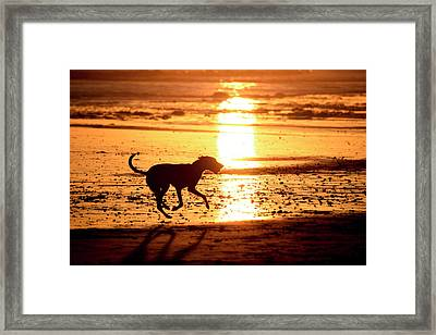 Doh At Sunset In  Silhouette Framed Print