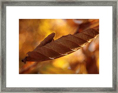 Doing The Twist Framed Print by Connie Handscomb