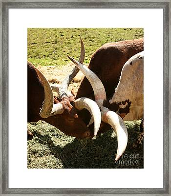 Framed Print featuring the photograph Doing The Watusi by Carol Lynn Coronios