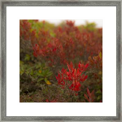 Dolly Sods Heath Framed Print