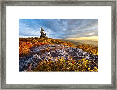 Dolly Sods Wilderness Framed Print