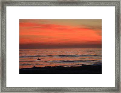 Framed Print featuring the photograph Dolphin At Cape Hatteras by Mountains to the Sea Photo