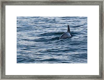 Dolphin Blue Framed Print by Linda Unger