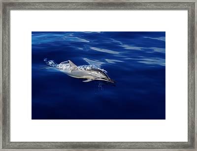 Dolphin Breaking Free Framed Print by John  Greaves