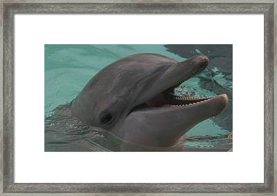 Dolphin Framed Print by Dervent Wiltshire
