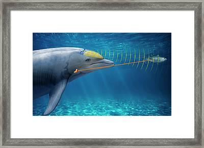 Dolphin Echolocation Framed Print