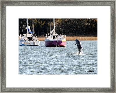 Dolphin In Taylors Creek Framed Print