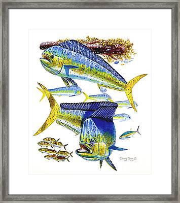 Dolphin In Weedline Framed Print