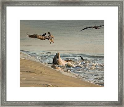 Framed Print featuring the photograph Dolphin Joy by Patricia Schaefer