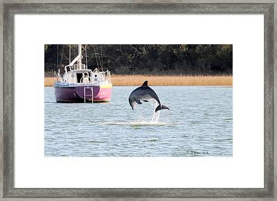 Dolphin Jumping In Taylors Creek Framed Print
