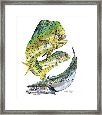 Dolphin Kingfish Framed Print by Carey Chen