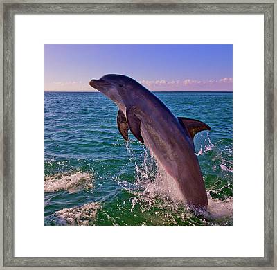 Dolphin Leaping From Sea, Roatan Framed Print by Keren Su