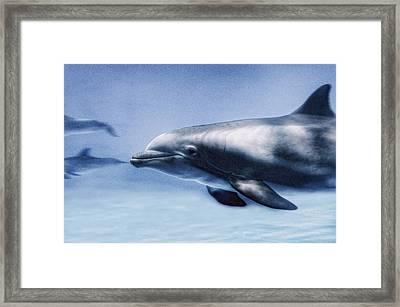 Dolphin  Framed Print by Marianna Mills