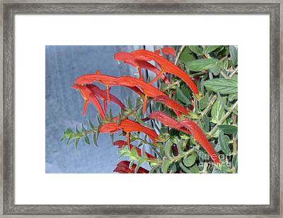 Framed Print featuring the photograph Dolphin Plant by Brenda Brown