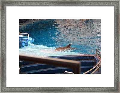 Dolphin Show - National Aquarium In Baltimore Md - 1212103 Framed Print by DC Photographer
