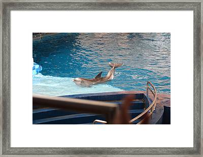 Dolphin Show - National Aquarium In Baltimore Md - 1212104 Framed Print