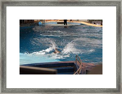 Dolphin Show - National Aquarium In Baltimore Md - 1212106 Framed Print by DC Photographer