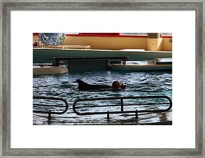 Dolphin Show - National Aquarium In Baltimore Md - 1212111 Framed Print by DC Photographer